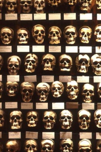 Image of the Hyrtl Skull Collection at the Mütter Museum