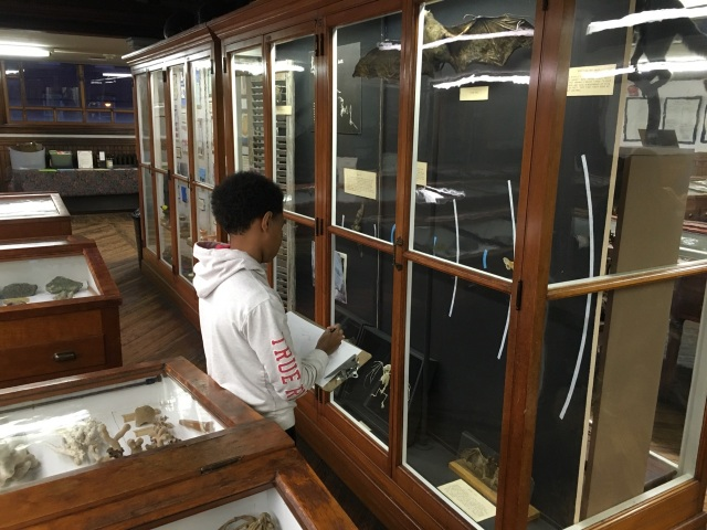 Vashon, a student in the Karabots Junior Fellows Program, sketches a flying fox bat specimen on display at the Wagner Free Institute of Science