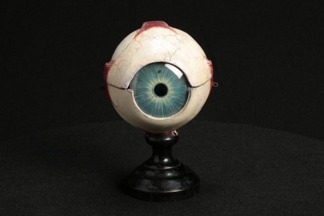 Image of a Papier Mache Eye model on display at the Mütter Museum
