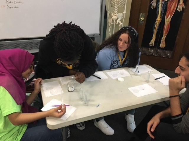 Students in the Karabots Junior Fellows program examine planarians in petri dishes.