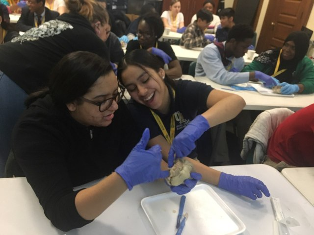 Students in the Karabots Junior Fellows Program work together to dissect a sheep heart.