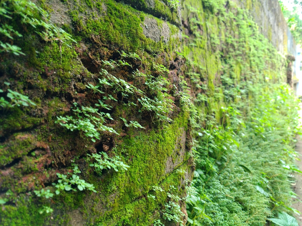 Photograph of plants growing out of a mossy, stone wall.