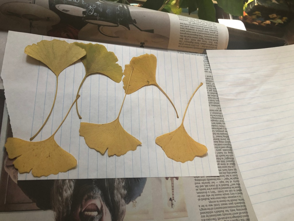 Pressed plant leaves on a sheet of lined looseleaf paper.